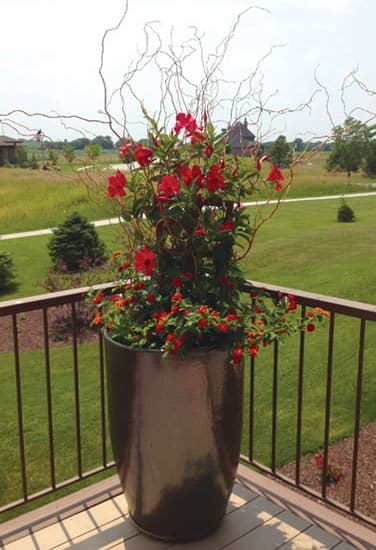 Container Gardening<br /><br /><span style=